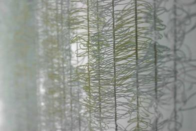 """Detalje af """"Papyrus Gimpelia"""""""