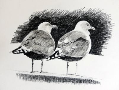 Måger set fra ryggen