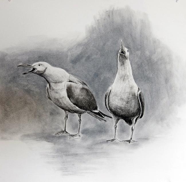 Måger tegnet med kul, 40 x 40 xm